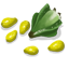 TrilliumSeed Icon.png
