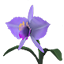 OrchidSeed Icon.png