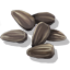 SunflowerSeed Icon.png