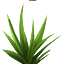 BunchgrassSeed Icon.png