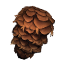 SpruceSeed Icon.png