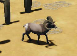 BighornSheep Animal.png