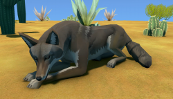 Coyote Animal.png
