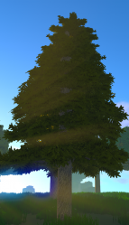 Fir Tree.png
