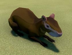 Agouti Animal.png