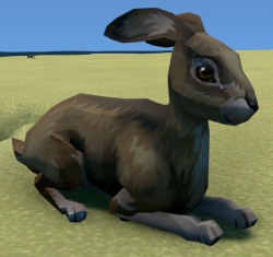 Hare Animal.png