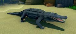Alligator Animal.jpg